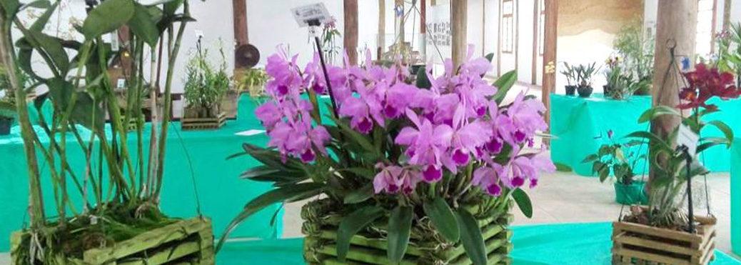 3ª Exposição de Orquídeas no Casarão do Chá